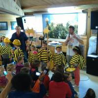 Des abeilles en rang d'oignon !